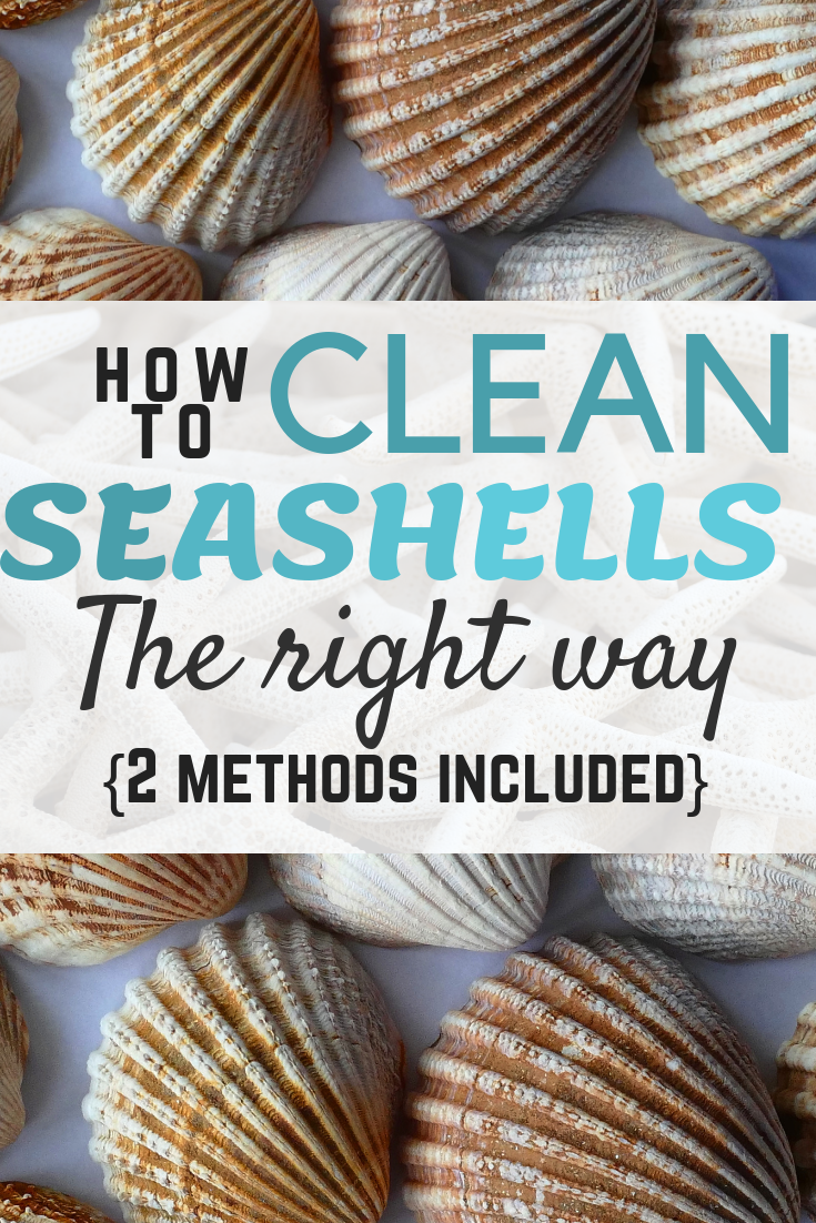 How to clean seashells the right way - no smells